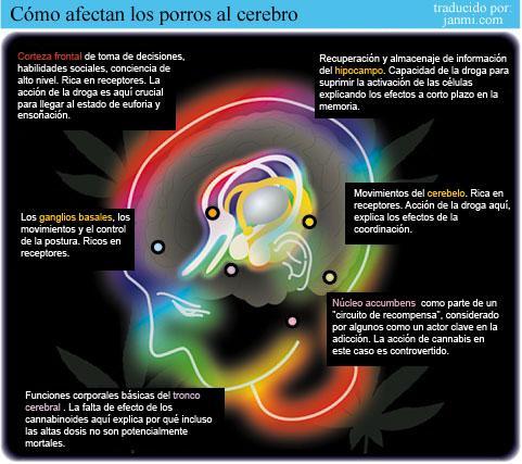 Cómo afectan los porros al cerebro