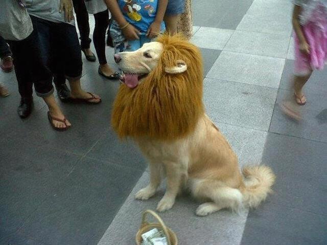 Etiquetas: carnaval disfraces disfraz león perro 24 febrero 2012