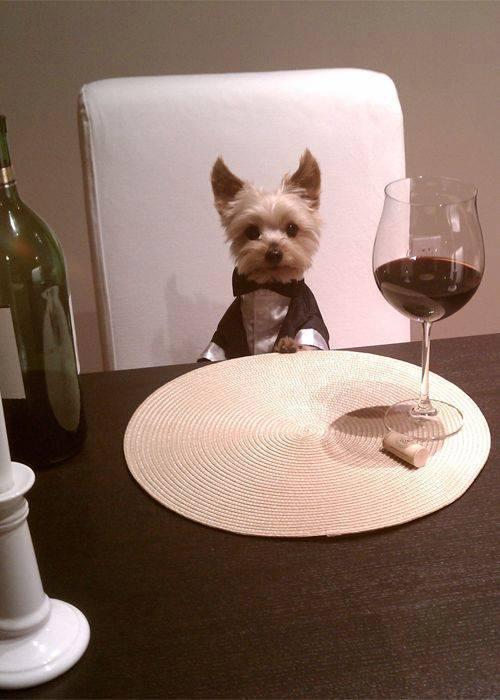 perro que come como un señor
