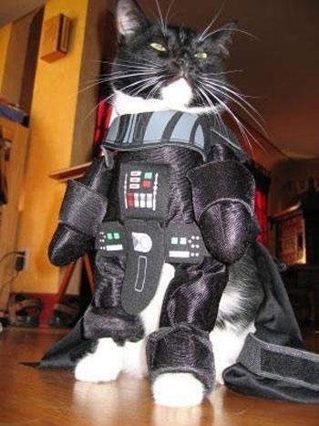 disfraz gato