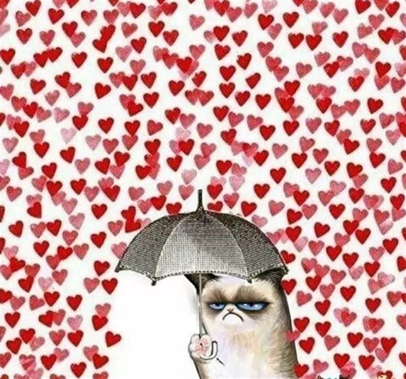 san valentin gato solo