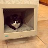 Cama de gato para informáticos