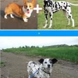 ¡Curiosas mezclas de perros!