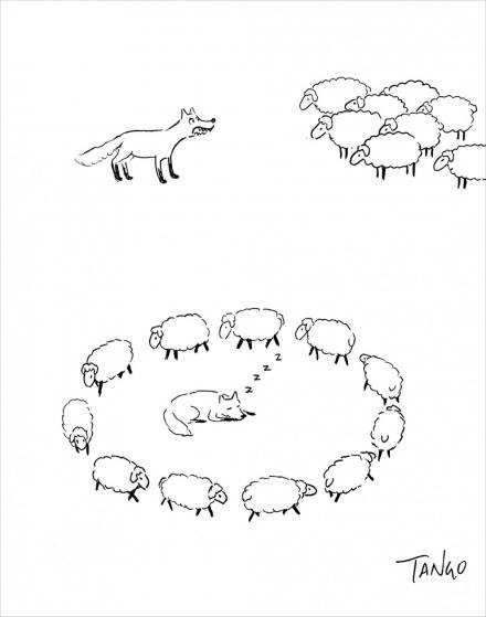 Como puede vencer un rebaño de ovejas a un lobo
