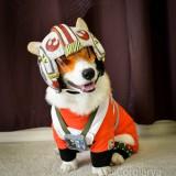 Perro disfrazado de piloto de X-Wing de Starwars