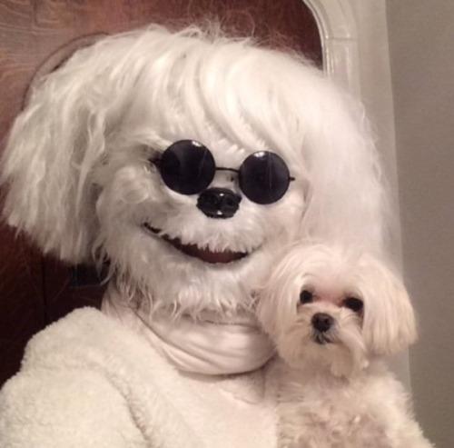disfraz-perro