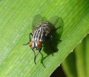¿Por qué las moscas se frotan las patas?