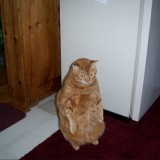 El Gato con Botas actualmente…