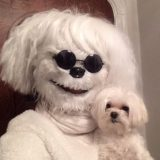 Disfraz de perro con el que parecerte… a tu perro